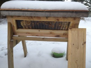 Inspecting a top bar hive at Steller Apiaries