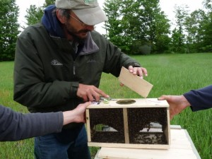 package bee cover removal